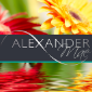 https://www.avonbusinessclub.co.uk/wp-content/uploads/2021/05/square-new-icon-small-alexandrea.png